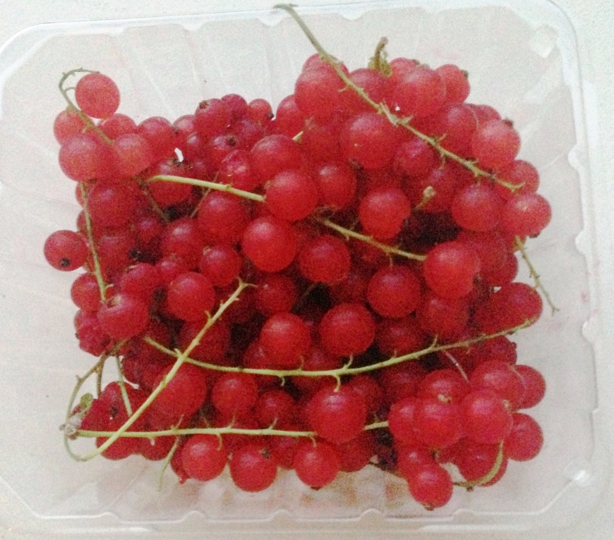 Beautiful fresh red currant I got the farmers market